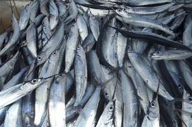 Pratiques frauduleuses de pêche surgelée