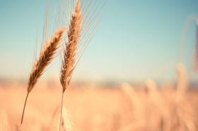 EGAlim : la restauration collective a du pain sur la planche
